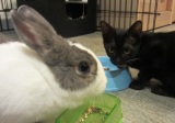 No one needs to travel with a cat & rabbit for 40 hours
