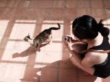 Cats of Crete